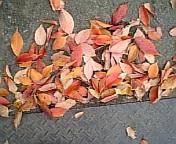 彩りの秋。